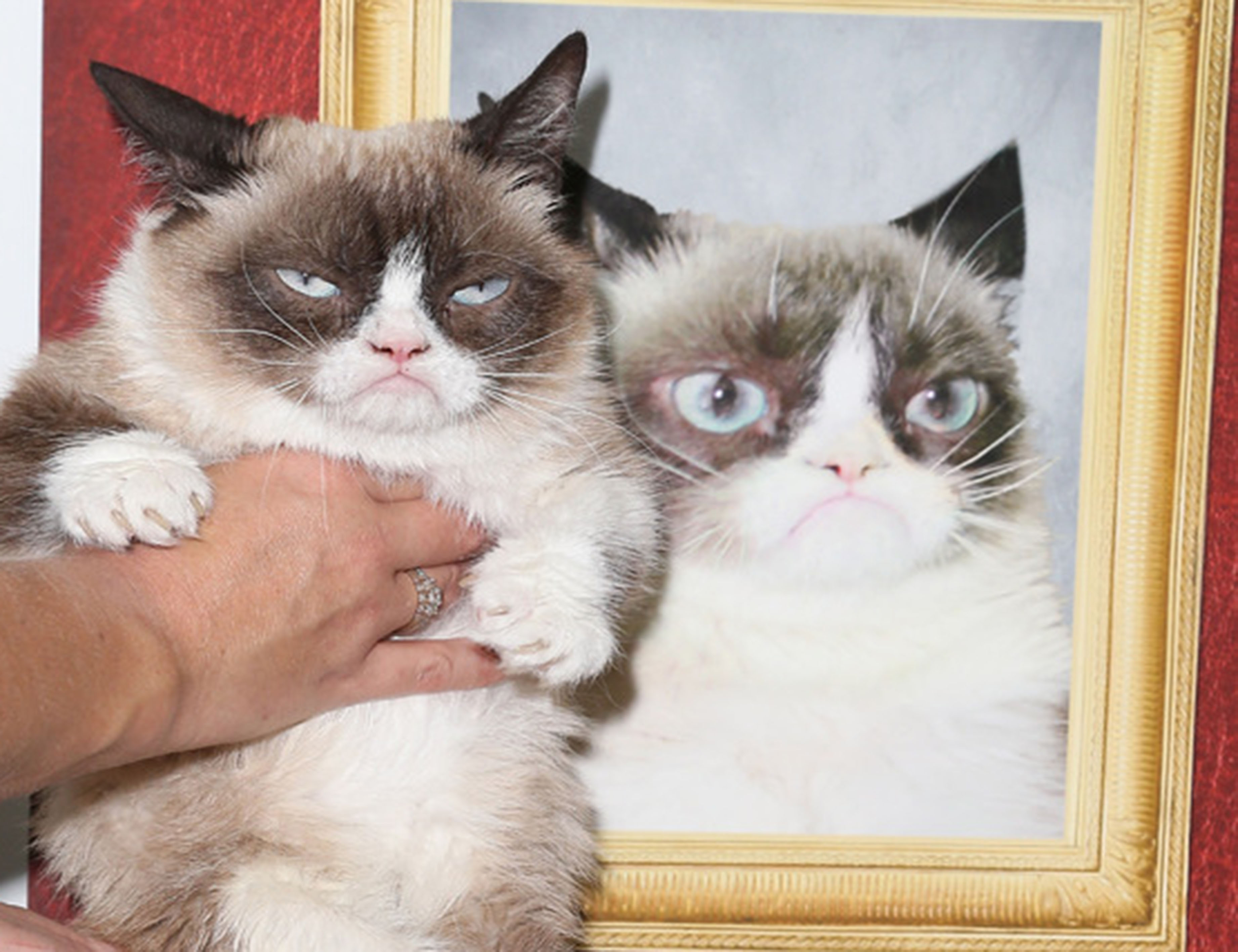 fun-grumpy-cat-book-launch-02