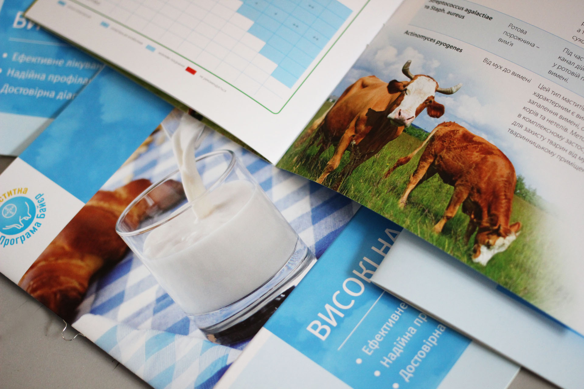 Печать каталов брошюр типография Киев